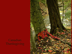 Canadian Thanksgiving (glantine) Tags: thanksgiving red leaves composition maple perfect dean keith canadian aliyah denise collaboration landart canadianthanksgiving hfg sensibilit fleurange