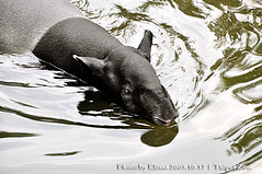 ...... (elissachris) Tags: animals taipeizoo 20091017