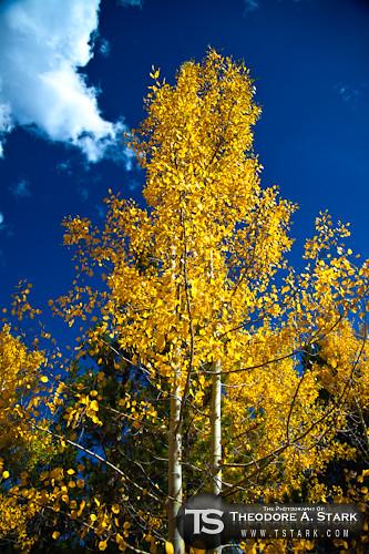 Autumn's Contrast