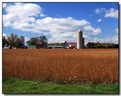 Farm (Lisa-S) Tags: blue autumn sky ontario canada green fall yellow clouds rural landscape farm lisas silo allrightsreserved caledon 6233 copyrightlisastokes