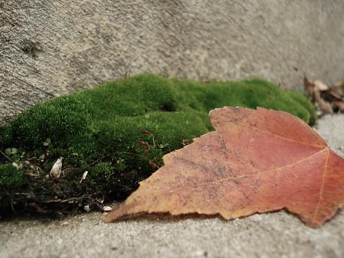 leaf and moss.