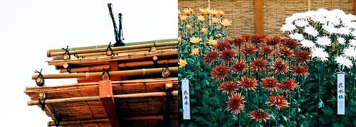 NYBG : Bamboo & Chrys.