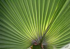 .. (B. Razzouk) Tags: plants tree green leaves landscape canoneos20d 2009 leav brazzouk