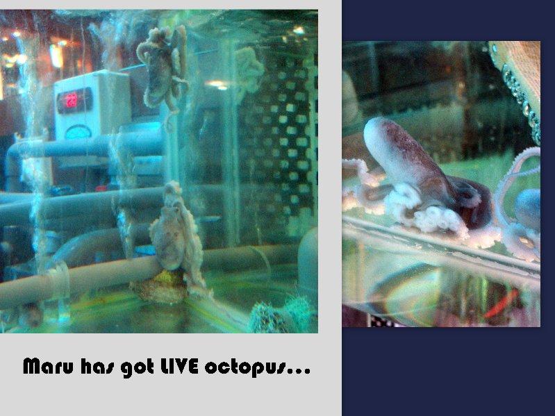 live octupus