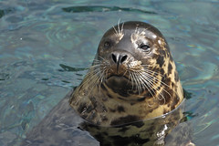 Seaworld- Seal__DSC3828-nx2