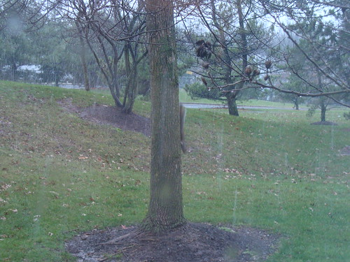 squirrel on tree during start of snow