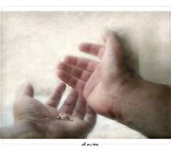 the offering < > la ofrenda