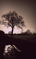 One million invisable lines out your head and into mine. (JessicaRose:)) Tags: winter sky cold reflection tree ice field sepia puddle frost bare branches gloucestershire trunk cloudless leafless picnik frosted a38 borwn