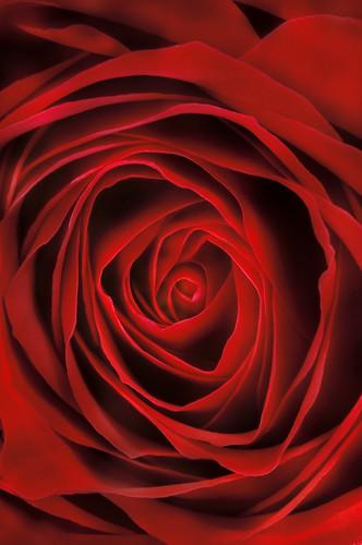 Eye of the Rose