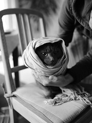 Taliban Cat - Louis (mg16373) Tags: cat 35mm kater ae 3514 umc weitwinkel samyang as d700 walimexpro