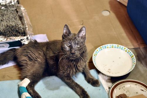 06/12/11 old broken kitty