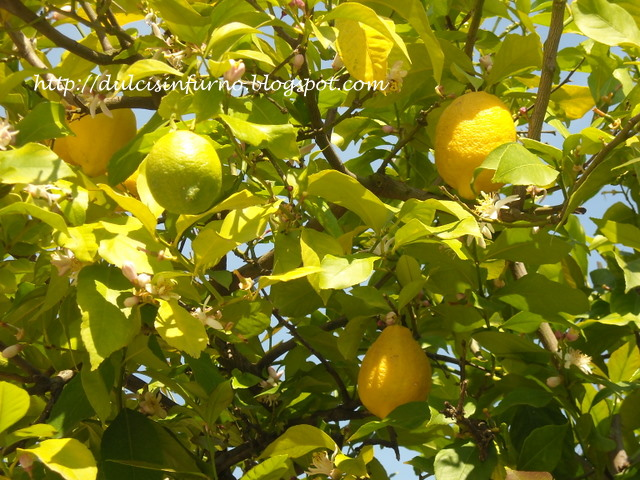 albero di limone - group picture, image by tag - keywordpictures.com