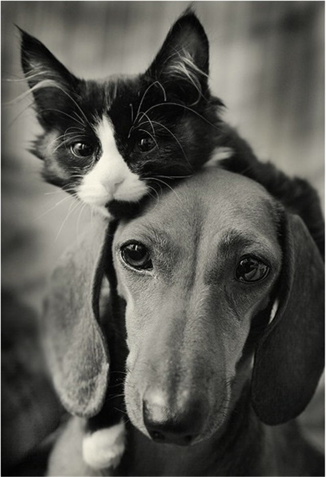 cats&dogs_10