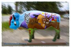 PAINTED BUFFALO (Thru My Eyes by julie) Tags: buffalo yellowstone buffalos buffaloes westyellowstonemontana paintedbuffalo