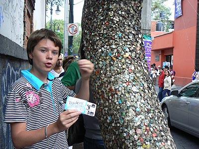 arbre aux chewing gums.jpg