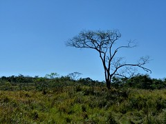 Fazenda Amarela - Ago2009 - Paisagem 010 (Z Antunes) Tags: trees brazil southamerica brasil landscape arbol lumix natureza sp arvore rvore lorena paisagens amricadosul dmcfz28 fazendaamarela zantunes josantunes