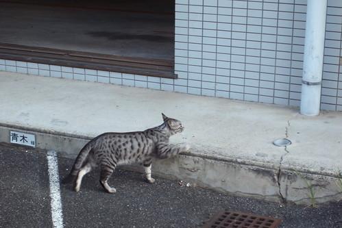 Today's Cat@20090907