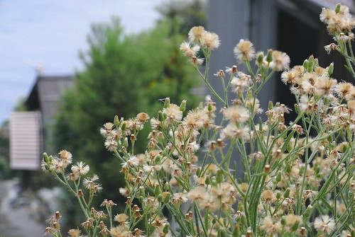 plants-016-3