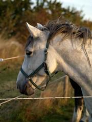 flegmatisk (sten) Tags: nya hästar