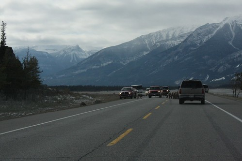 drive through the canadian rockies
