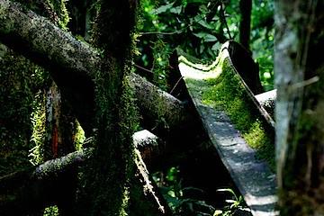 Bwindi Bird Walk - 09