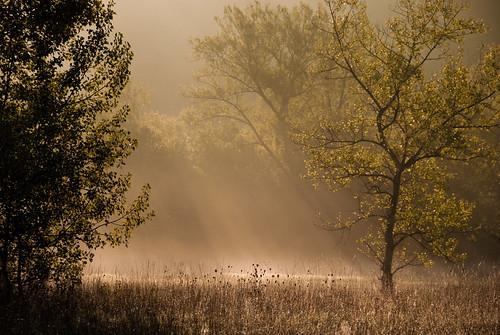 フリー画像| 自然風景| 霧/靄| 森林/山林| 太陽光線| スイス風景|      フリー素材|