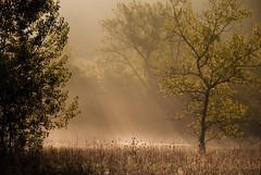 [フリー画像] [自然風景] [霧/靄] [森林/山林] [太陽光線] [スイス風景]      [フリー素材]