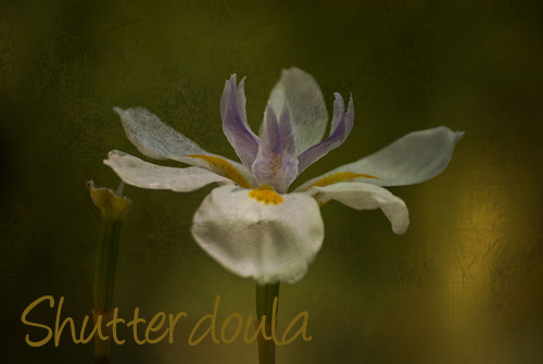 TexturedFlower1