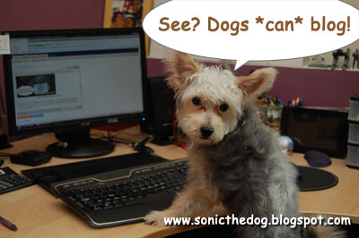 Blogging Dog