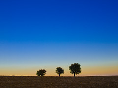 Three alone trees.. (Nick-K (Nikos Koutoulas)) Tags: sky nature nikos visualart twop nickk fotocommunity   kozani  anawesomeshot  flickraward    gvr1 koutoulas