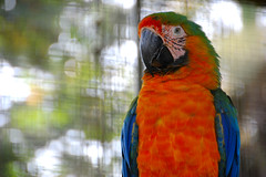 Max (EmperorNorton47) Tags: birds hawaii photo bokeh hilo parrots zoos catalinamacaw panaewarainforestzoo aramacaoxaraararauna