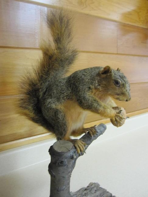 Hug a Nut
