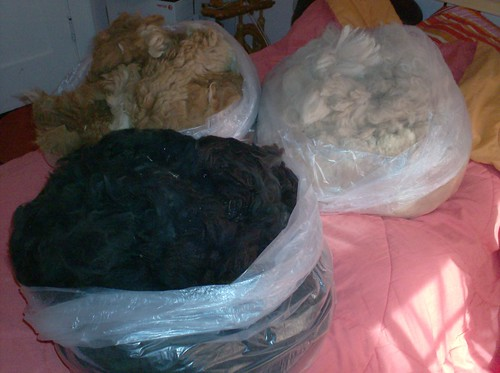 Alpaca fleeces three bags of huacaya alpaca spinning knitting fiber
