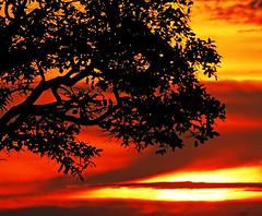 crépuscule (Edison Zanatto) Tags: sunset brazil sky naturaleza sun sol southamerica nature brasília brasil skyline backlight clouds sunrise atardecer soleil nuvole natureza natur wolken paisaje paisagem céu pôrdosol cielo nubes cumulus nuvens 夕陽 nuvem crépuscule landschaft sonne paesaggi ocaso sonneuntergang alvorada stratus controluce anochecer anoitecer coucherdesoleil crepúsculo nascente contrallum puestadelsol americadosul cirros poente puestas fimdetarde cumulusnimbus luscofusco südamerika centrooeste cumulonimbusclouds nikond200 dilúculo postadelsol regiãocentrooeste crepúsculovespertino postadosol continentesulamericano 的云彩 edisonzanatto