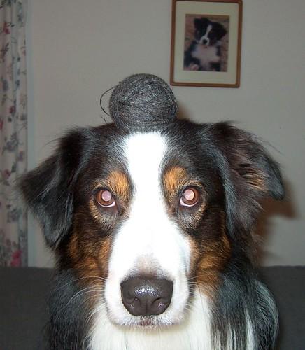 DogBall 003