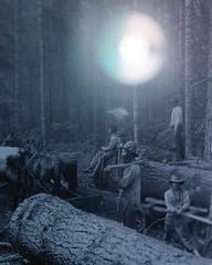 woods ((eclipse)) (reuben^james^^) Tags: blue light lamp eclipse twilight fuji moonlight hue 5x4 reinterpretation emanation