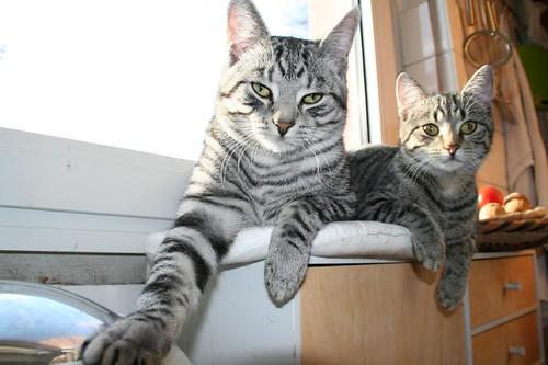 Wir haben die Tatze auf dem Katzenkontent we have to confirm every picture