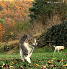 The Ninja Cat! (Xena*best friend*) Tags: wood autumn wild italy pet cats animals fur chats furry woods feline cd tiger kitty kittens whiskers piemonte lena attitude gato paws gatto katzen feral wildanimals catherinedeneuve ninjacat alleycatallies kissablekat piedmontitaly bestofcats kittystormtroopers canoneos500d citrit catherined