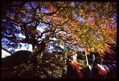 20091121_0327_Hologon16_M6_Chichibu_Saizenji (*Leiss) Tags: leica japan zeiss temple 16mm e100vs m6 hologon 2009 chichibu saizenji zeisshologon16mmf80 m3j