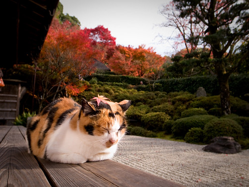 Cat Cafe Japan Kyoto