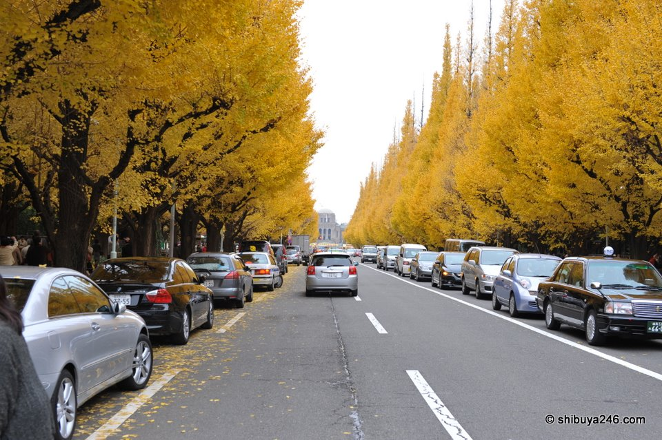 The Ginkgo Tree Avenue heading down to the Meiji Memorial Picture Gallery.