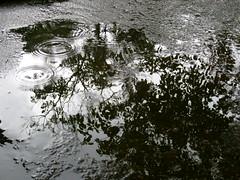 Rainy day / Dia chuvoso (IgorCamacho) Tags: brazil reflection primavera rain weather brasil reflex spring lluvia do day chuva dia southern rainy reflexo tempo sul chuvoso