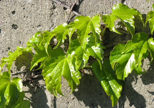 Leaves Against A Wall