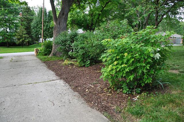 Driveway bushes