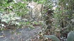 video paisaje La Fortuna Ecocentro Danaus Reserva Biológica Costa Rica (Rafael Gomez - http://micamara.es) Tags: la fortuna ecocentro danaus reserva biológica costa rica paisaje bosque bosques vegetacion canales canal rio agua