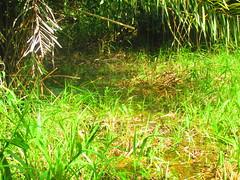 IMG_8988 (claudio.secci) Tags: grandriverlodge riosanjuan