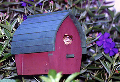 Frog in Bird House