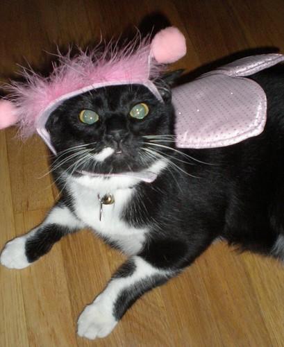 Ollie's Halloween Costume