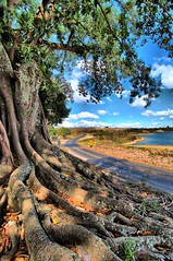 Road Tree (Shigow) Tags: road brazil tree nature colors brasil composition cores nikon mine natureza roots victor mg tokina estrada sp root árvore raizes raiz d300 composição capitólio 1116 shigueru ituverava shigow