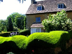 Undulating Hedge in Bourton on the Hill, Cotswolds, Gloucestershire